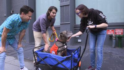 image61 400x225 Go To Team New York Crew | Animal Planet | Adoption Series