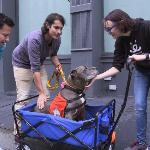 image61 500x500 Go To Team New York Crew | Animal Planet | Adoption Series