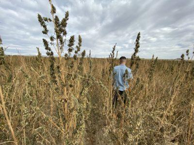 IMG 2729 e1575923173390 400x300 Go To Team Denver Crew | Nightline   Colorado Cultivars