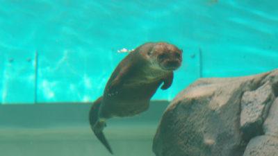 STLaqua 2 400x225 Go To Team St. Louis Crew | Definition 6   STL Aquarium