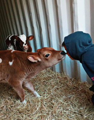 image3 313x400 Go To Team Charlotte Crew | The DoDo   Cow Adoption Day