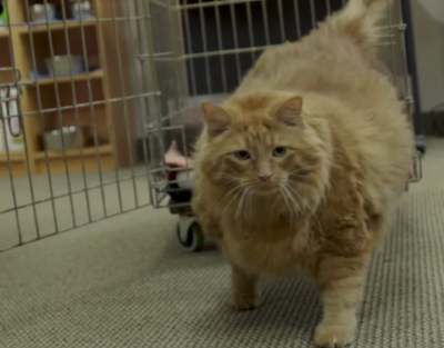 Go To Team Charlotte Crew | The DoDo - Overweight Cat