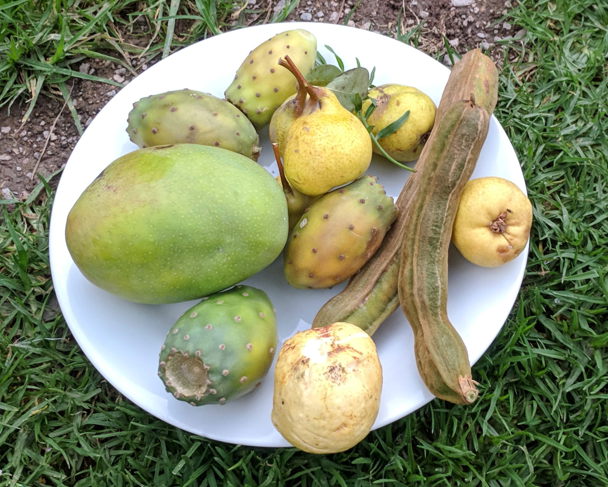 Fruit collected from the trek