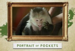 Portrait Of Pockets 1