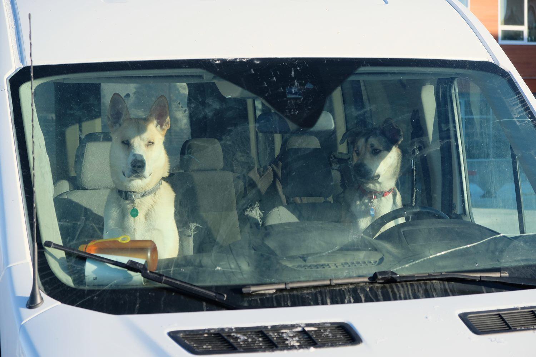 Jots-19_Dogs.jpg