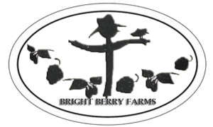 Brightberry Farm Blackberries, 1/2 pint, local