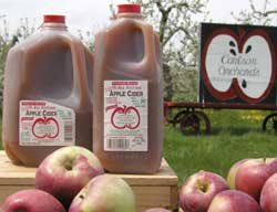 Carlson Apple Cider