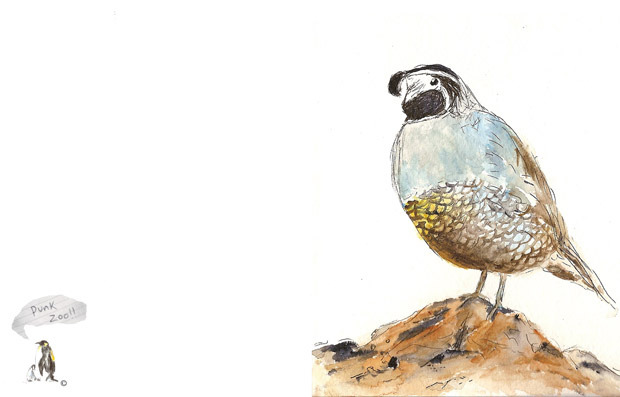 Ponytail's Willy Siegel's One Quail greeting card