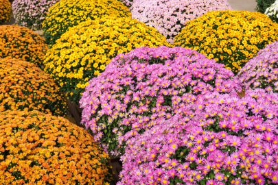 Stock Up on Fall Plants at ACCESS Sale