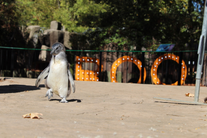 10 Reasons to Visit Boo at the Zoo