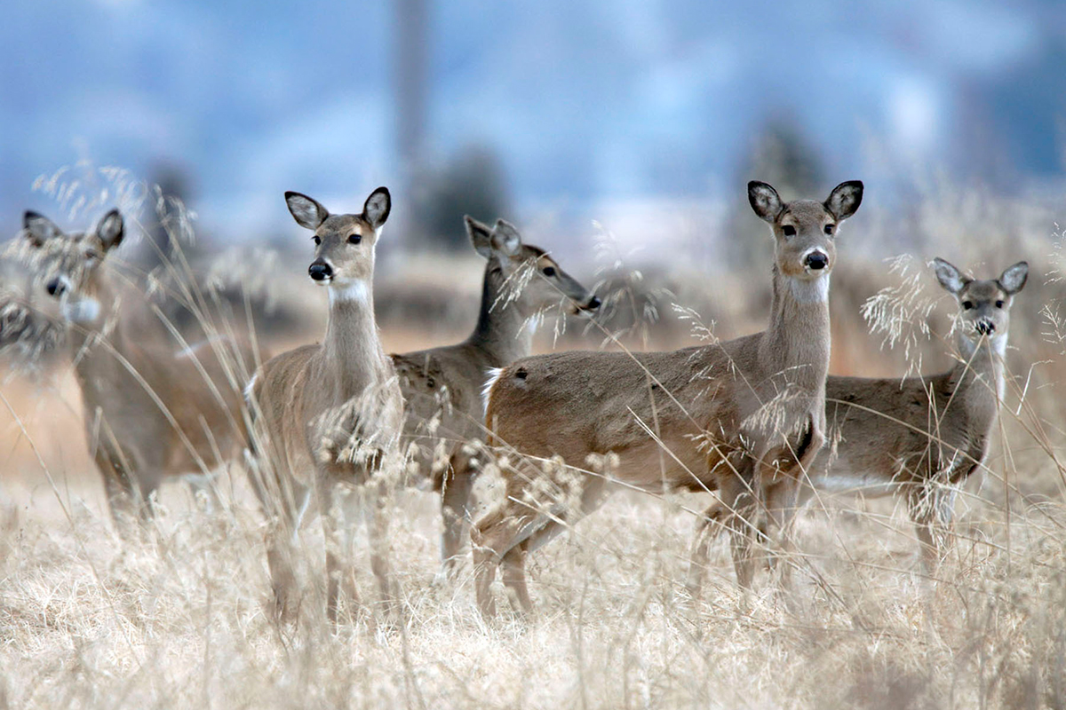 Hunters Should Arm Themselves Against Chronic Wasting Disease