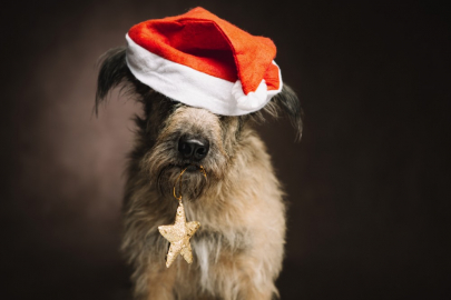 Get Fido on the Nice List at Paws with Santa Claus
