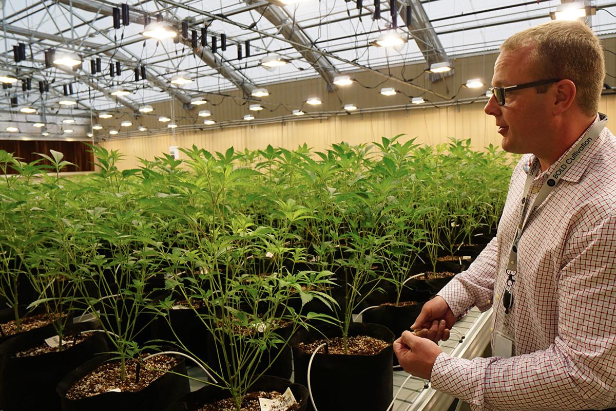 Feds Seize Cannabis Seeds Heading to Bold Team Facility
