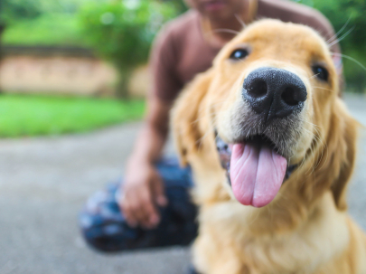 Museum of Discovery to Host Dog Days of Science Event
