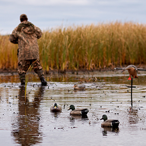Arkansas Duck Hunting Not Dead Yet