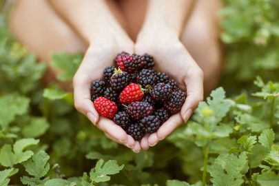 Where to Pick Berries in Central Arkansas