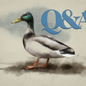 Greenhead Q&A: An Inside View of the Hunt from 9 Arkansas Executives