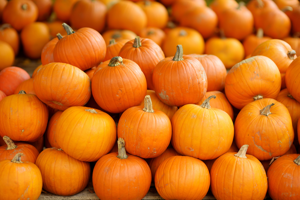 Fall autumn pumpkins