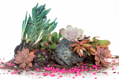 Love to Grow: A Succulent Valentine's Day Craft