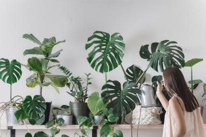 A Much-Needed Boost: How At-Home Office Plants Can Help Your Mood