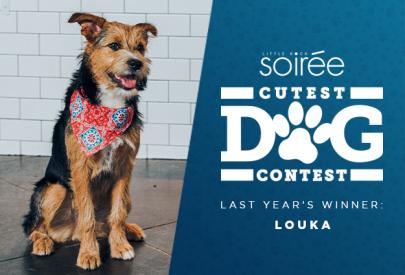 Round 1: Vote for Soirée's Cutest Dog!