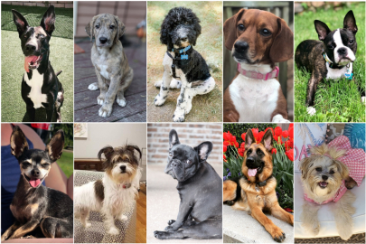 Final Round: Vote Now to Crown the Cutest Dog in the Metro!