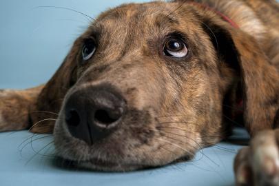 Meet Bruce: Little Rock Soirée's Cutest Dog