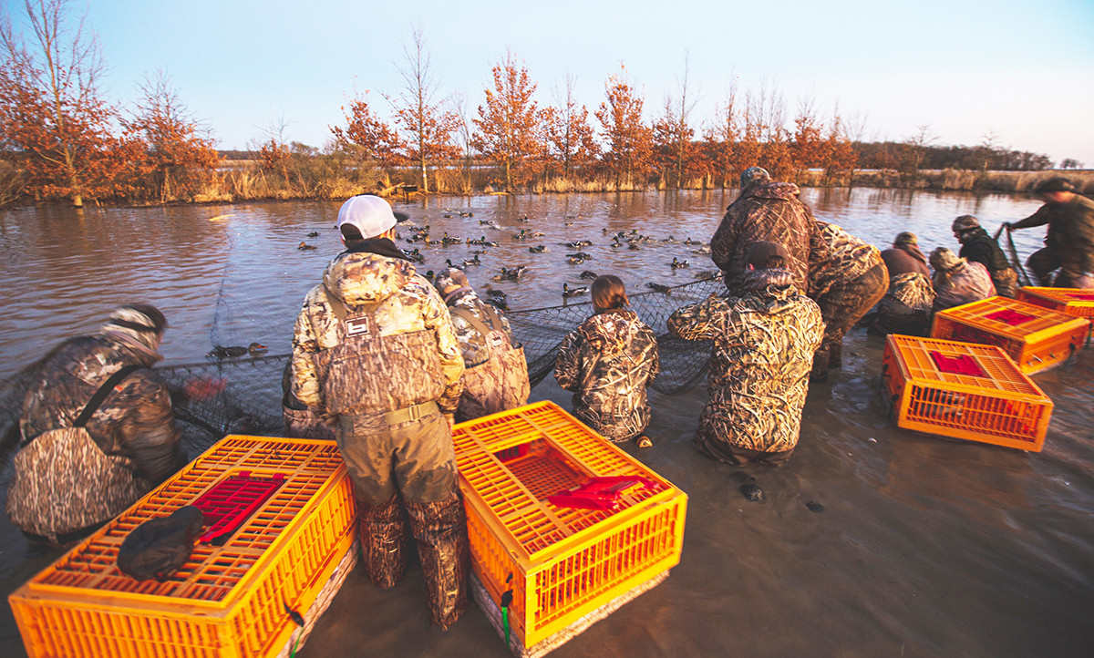 Waterfowl Management  Hinges On HIP Shot 132486
