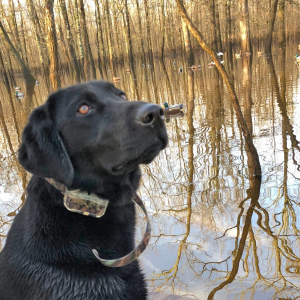 If You Hunt With A Dog, You Never Go Into The Woods Alone