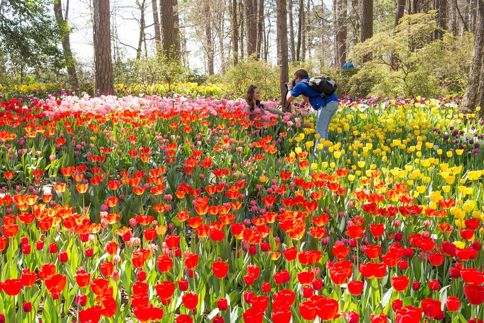 LRFAM March 2021 134715 Garvan Gardens