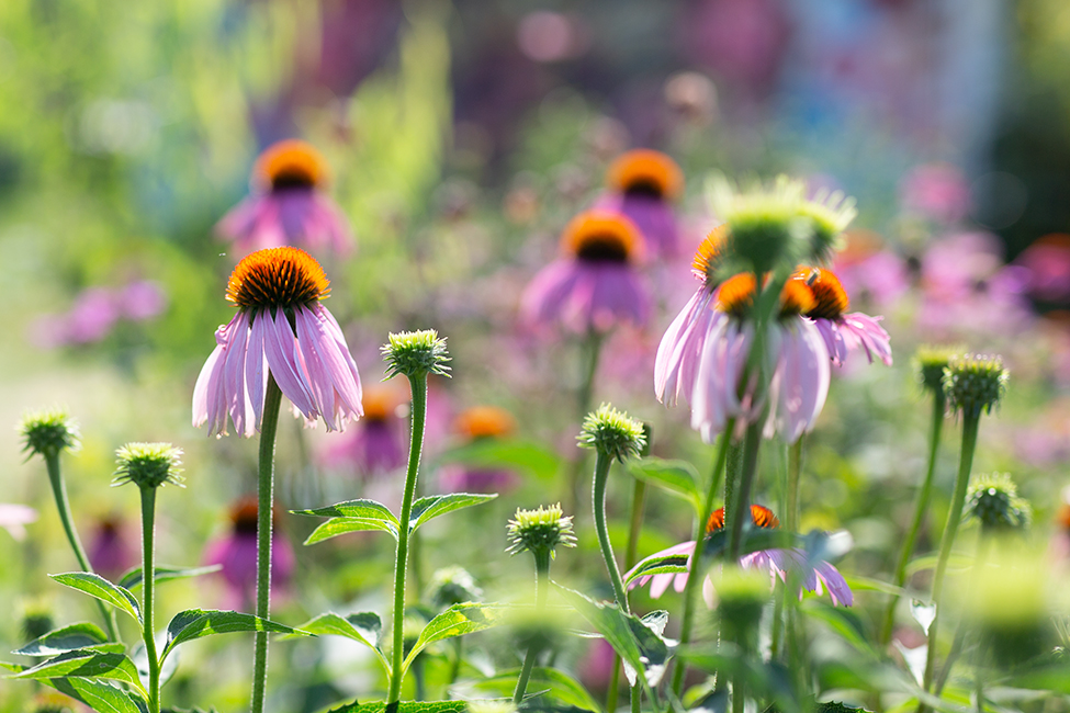 Dunbar Community Garden 134803