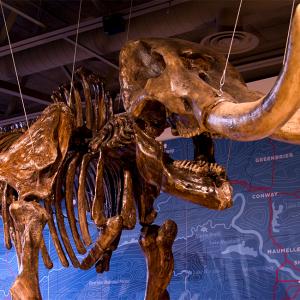 Mid-America Science Museum Names 5 New Trustees