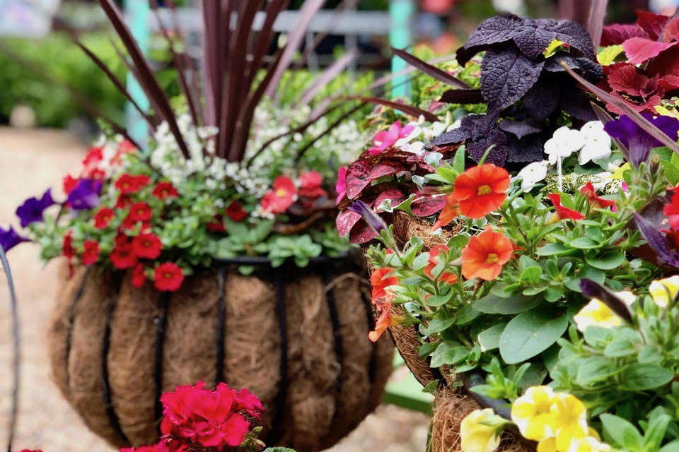 How to Create Custom Combination Pots for Spring