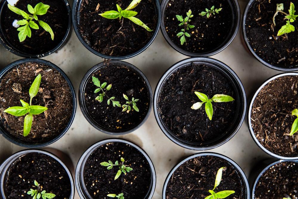 seedlings plants gardening