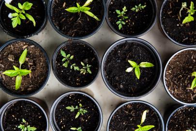 3 Ways Gardening Makes You Healthier