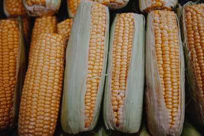 Next 'History is Served' Dinner to Highlight Taste & Culture of Corn in Arkansas