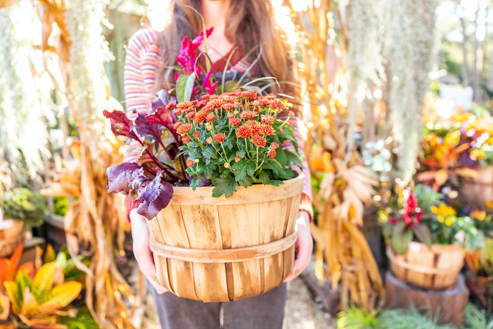 fall combination planter - The Good Earth Garden Center