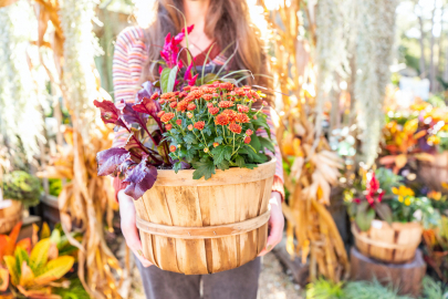 SPONSORED: How to Create a Gorgeous Fall Container in 5 Easy Steps