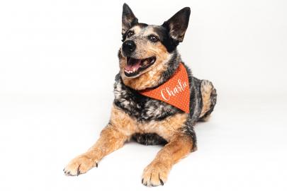 Meet Charlie: Little Rock Soirée's Cutest Dog 2021