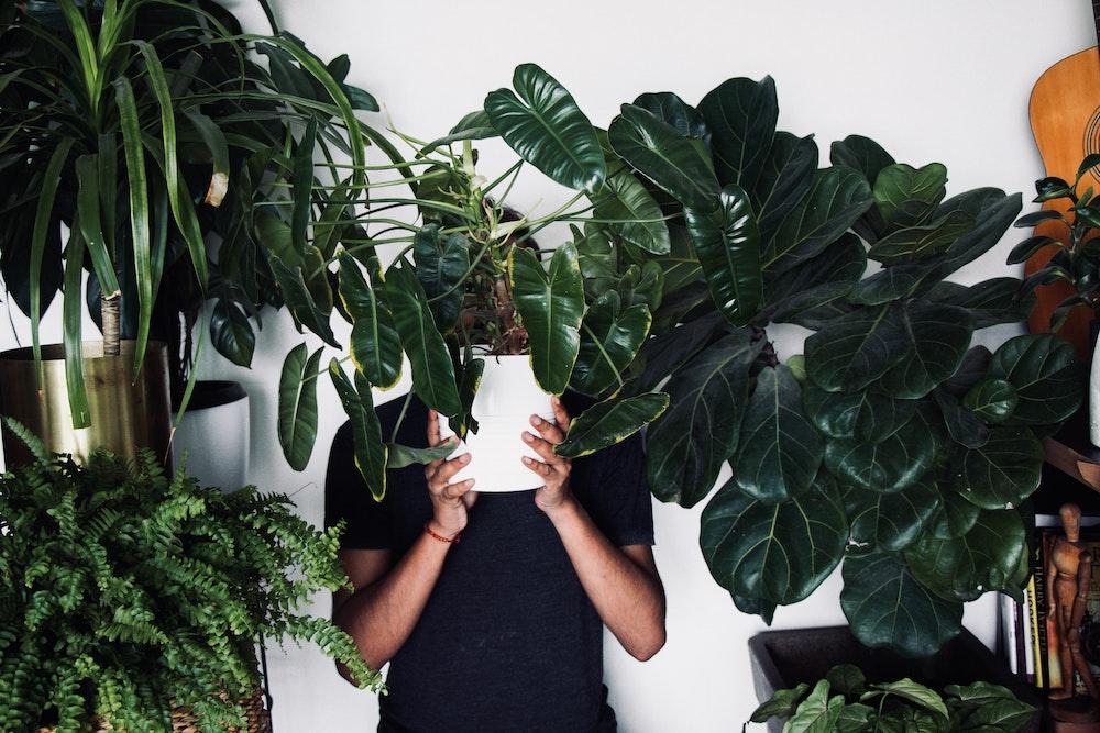 houseplants, plants, nature