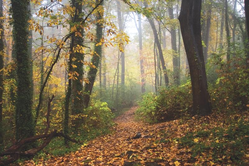 Allsopp Park in Hillcrest