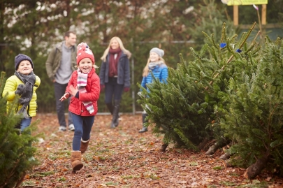 5 Christmas Tree Farms in Central Arkansas