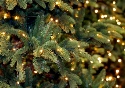 Six Can't-Miss Christmas Trees in the Metro