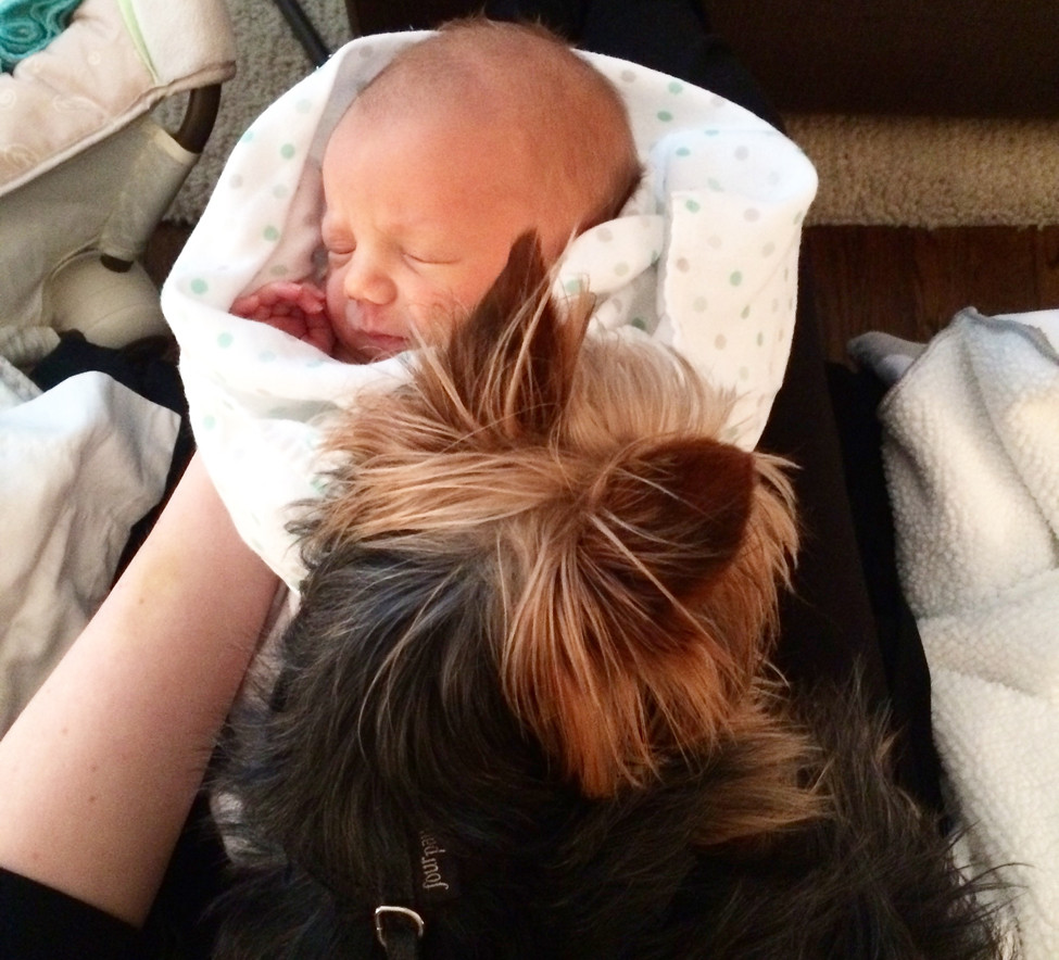 4 Ways To Prep Your Pup For The New Baby Little Rock Family