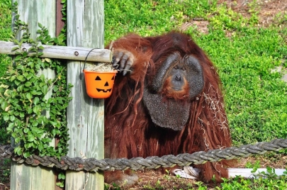 Get Ready for New Theme Nights at Boo at the Zoo