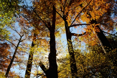 Where to Catch Fall Foliage in Arkansas