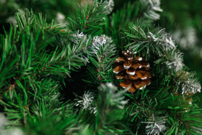 SoMa to Celebrate the Season with Tree Lighting Ceremony