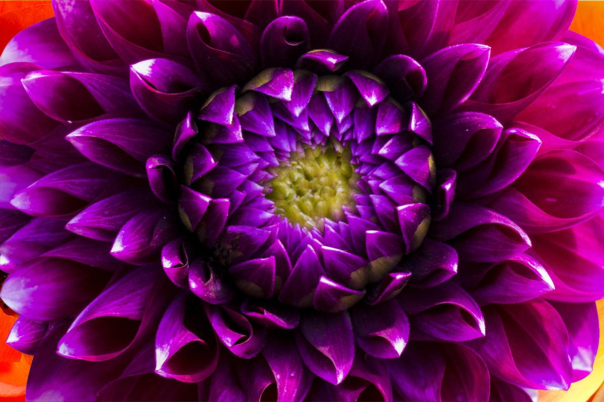 Big ol wedding flower