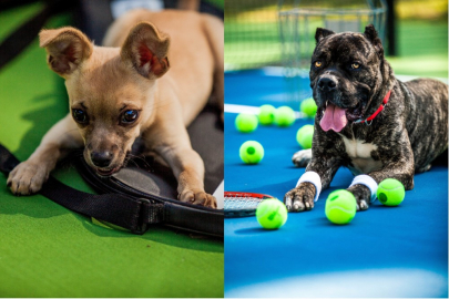 Meet Asher and Maslow, Your New Best Fur Friends