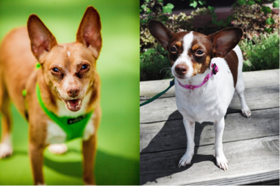 Say 'Hello' to Zinger and Lola, Your New Best Fur Friends